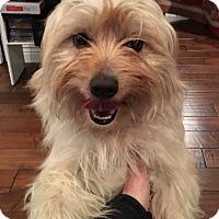 Adopt A Pet :: Martha - Pleasanton, CA
