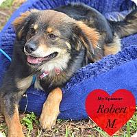 Adopt A Pet :: Dexter - San Leon, TX