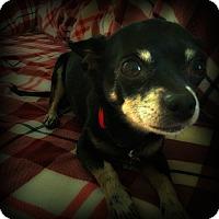 Adopt A Pet :: Emily - Tijeras, NM