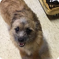 Adopt A Pet :: September - Harmony, Glocester, RI