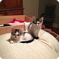 Adopt A Pet :: Pepper - Cranford/Rartian, NJ