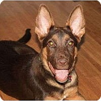 Adopt A Pet :: Dora - Nashville, TN