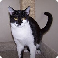 Adopt A Pet :: K-Blevin1-Dot - Colorado Springs, CO