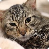 Adopt A Pet :: Jermaine - Sacramento, CA
