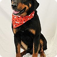 Adopt A Pet :: Trevor - latrobe, PA