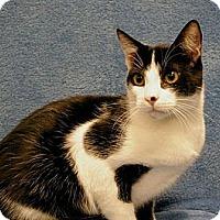 Adopt A Pet :: Italics - Sacramento, CA