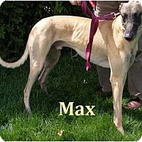 Adopt A Pet :: Max - Fremont, OH