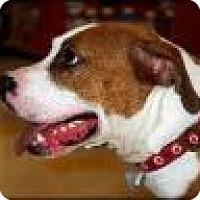 Adopt A Pet :: Apache - Kendall, NY