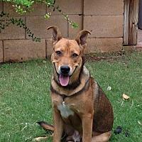 Adopt A Pet :: Lugg - Phoenix, AZ