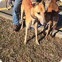 Adopt A Pet :: D Ark Aglow - Knoxville, TN