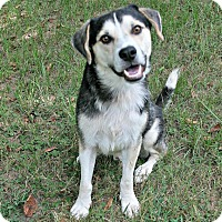 Adopt A Pet :: Johnny - Lufkin, TX