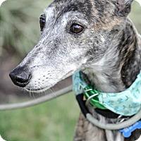 Adopt A Pet :: Noreen aka RTR Queen Noreen - Gainesville, FL