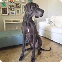 Adopt A Pet :: Gunther - Phoenix, AZ