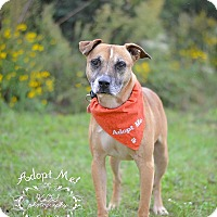 Adopt A Pet :: Phoenix - Fort Valley, GA