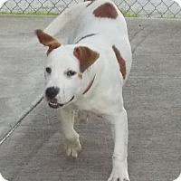 Adopt A Pet :: Feo - Lewisburg, TN