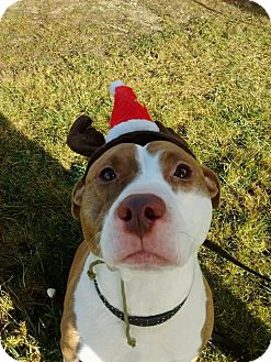 Pit Bull Terrier Dog for adoption in Bay City, Michigan - Pink
