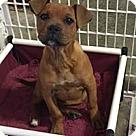 Adopt A Pet :: Nancy