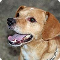 Adopt A Pet :: Kenny - Palm Springs, CA