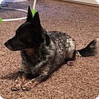 Adopt A Pet :: Clay - Little Rock, AR