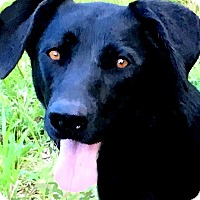 Adopt A Pet :: SALLY(THE SWEETEST GIRL EVER! - Wakefield, RI