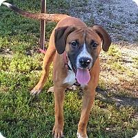 Adopt A Pet :: Lance - Paris, IL