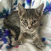 Adopt A Pet :: Camille - Tampa, FL