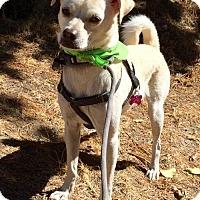 Adopt A Pet :: Jionni - Mission viejo, CA