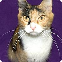 Adopt A Pet :: Patches - Watauga, TX