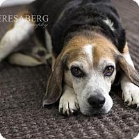 Adopt A Pet :: Homer - McKinney, TX