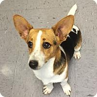 Adopt A Pet :: Flynn - Friendswood, TX