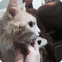 Adopt A Pet :: Rumplestiltskin - Austin, TX