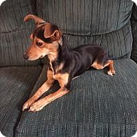Adopt A Pet :: Sandye - Hampton, VA