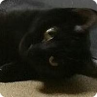 Adopt A Pet :: Winnie - Chula Vista, CA