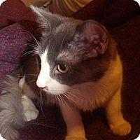 Adopt A Pet :: Dash - Porter, TX