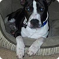 Adopt A Pet :: Buddy,your new BF - Sacramento, CA