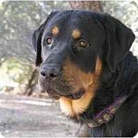 Adopt A Pet :: Beavis - Scottsdale, AZ