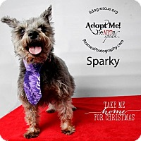 Adopt A Pet :: Miss Sparky - Shawnee Mission, KS