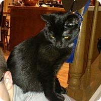 Adopt A Pet :: Happy - Raritan, NJ