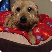 Adopt A Pet :: Louie - Wilmington, DE