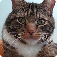 Adopt A Pet :: Cody - St. Paul, MN