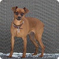Adopt A Pet :: Jimmy - Drumbo, ON
