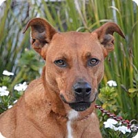 Adopt A Pet :: Tommy - Downey, CA