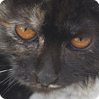 Adopt A Pet :: Angie - Brooklyn, NY