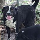 Adopt A Pet :: Daryl