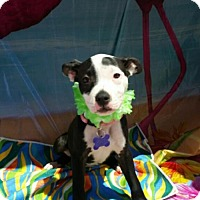 Adopt A Pet :: Sophie - Richmond, CA