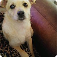Adopt A Pet :: Benji - Winchester, VA
