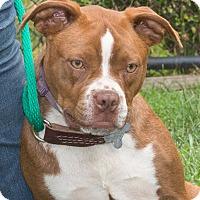 Adopt A Pet :: Fauna - Elmwood Park, NJ