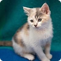 Adopt A Pet :: Serena - Millersville, MD