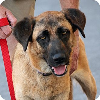 Shepherd (Unknown Type) Mix Dog for adoption in Palmdale, California - Sadie