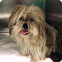 Adopt A Pet :: Mason - Atlanta, GA
